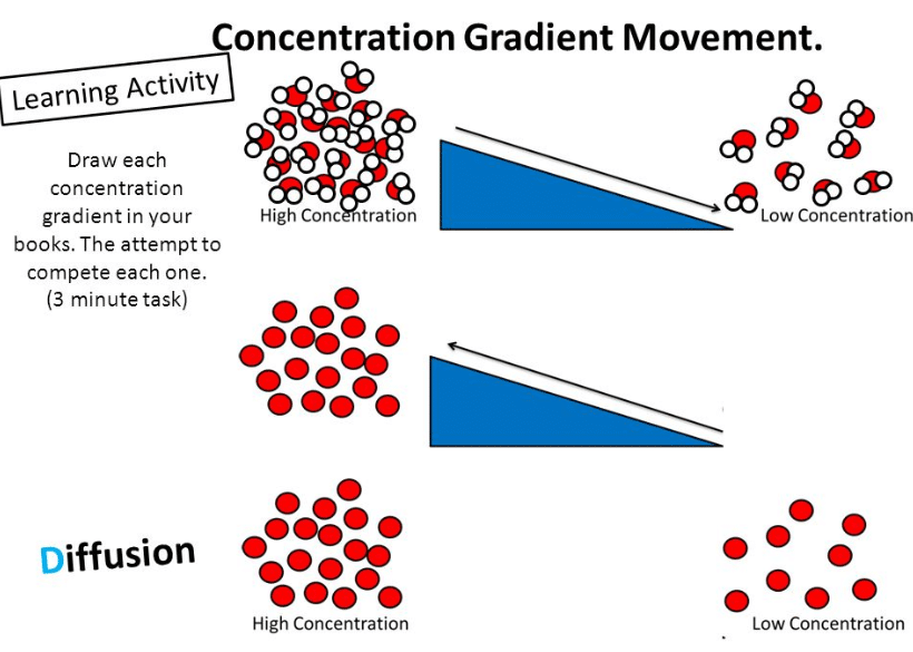 What Is A Concentration Gradient? Defination